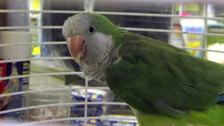 Marta's Pet Shop – Birds