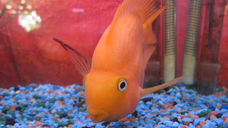 Marta's Pet Shop – Fish
