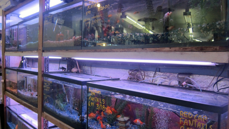 Marta's Pet Shop – Fish – Tanks
